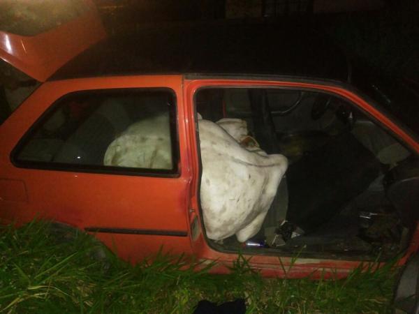 Ladrões furtam boi e fogem com o animal dentro de carro