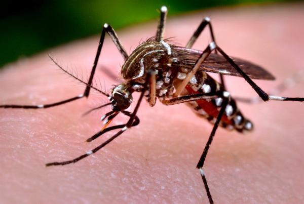 Febre amarela: sintomas, transmissão e prevenção