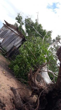 Temporal deixa prejuízos em propriedades rurais em Alvorada do Oeste