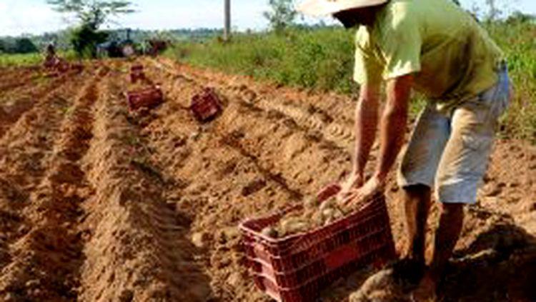 EFICIÊNCIA: Reestruturação da Emater visa modernização para uma assistência técnica e extensão rural