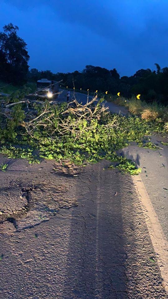 Alvorada do Oeste - Árvore cai na BR 429 próximo ao Rio Muqui e pista fica interditada