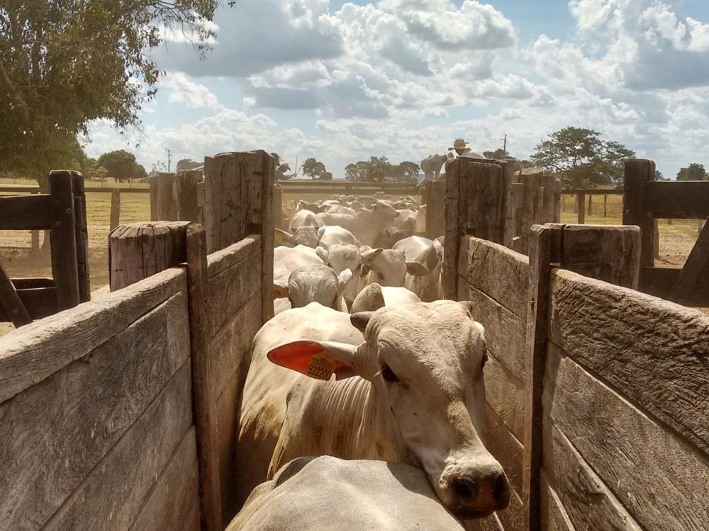 Rondônia é oficialmente área livre de febre aftosa sem vacinação