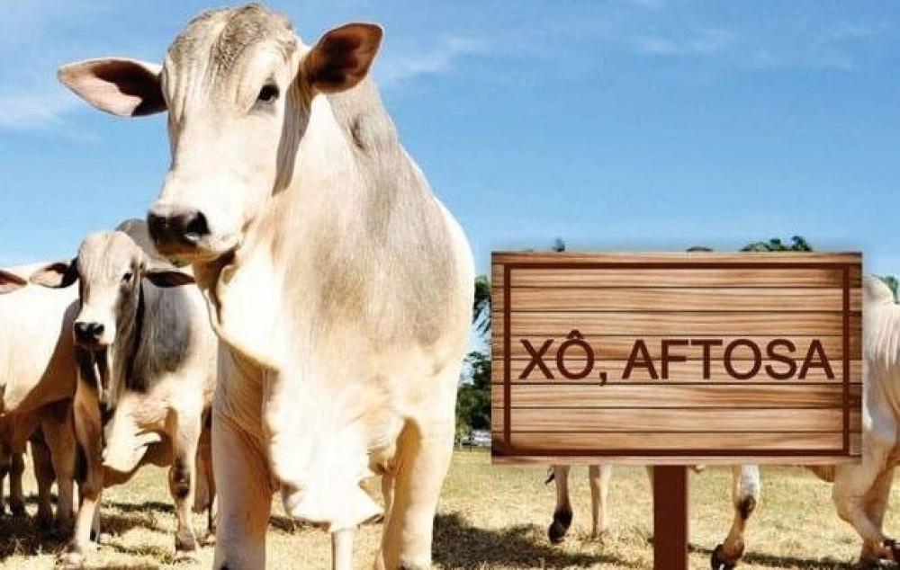Trânsito de animais vindo de estado com vacinação contra febre aftosa fica proibido em Rondônia