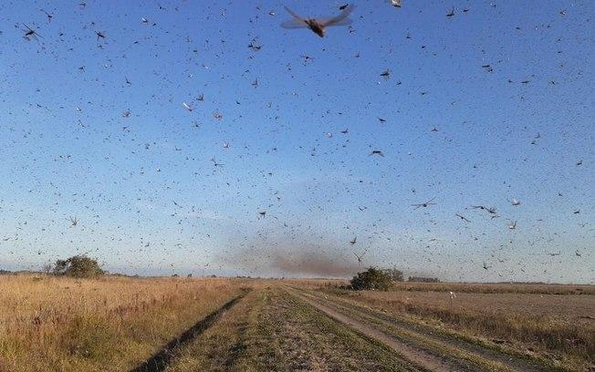 Nuvem de gafanhotos avança pela Argentina e está perto do Brasil, veja o vídeo