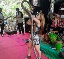 Cantora é picada por cobra, continua show, mas acaba morrendo no palco