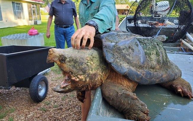Tartaruga gigante de 56 quilos é resgatada nos EUA, veja as fotos