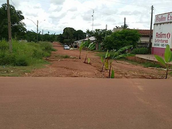 Bananeiras são plantadas em avenida de RO em protesto contra buracos