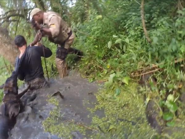 Cão policial de SC localiza suspeito escondido dentro d'água; veja vídeo