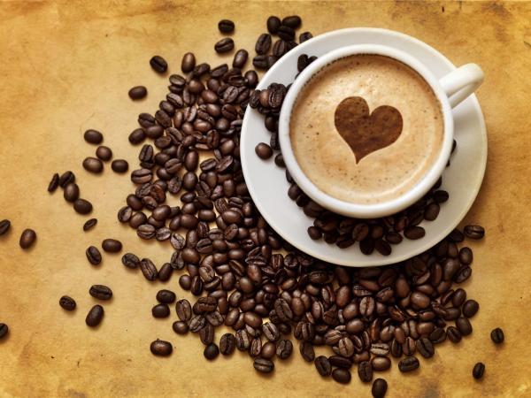 Colheita de café conilon em Rondônia começa com boas expectativas